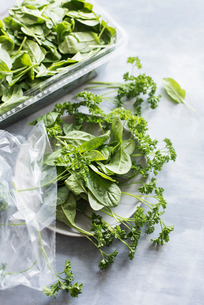 Spinach leaves and parsley on ceramic plateの写真素材 [FYI03602444]