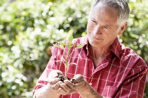 Man planting seedlingの写真素材 [FYI03602881]