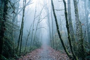 Pathway through forest, Bainbridge, Washington, USAの写真素材 [FYI03603476]