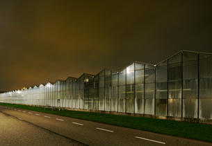 Greenhouse at night, in Westland,  area with the highest concentration of greenhouses in Netherlandsの写真素材 [FYI03603900]