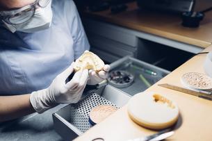 Dentist making denture in laboratoryの写真素材 [FYI03604833]