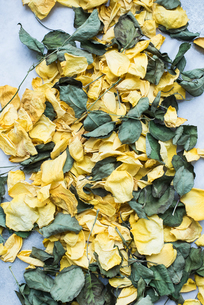 Rose petals and dry leavesの写真素材 [FYI03605860]