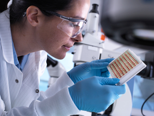 Scientist viewing a multi well plate containing blood samples for screeningの写真素材 [FYI03607286]