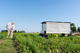 Crops and flowers on agricultural site being monitored by robot in pixelfarming researchの写真素材 [FYI03607510]
