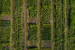Rows and patches of crops on agricultural landの写真素材 [FYI03607512]