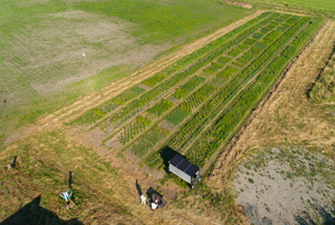 Crops and flowers on agricultural site being monitored by robot in pixelfarming researchの写真素材 [FYI03607513]
