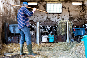 Dairy farm worker cleaning out cattle penの写真素材 [FYI03607704]
