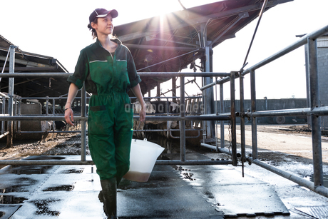 Dairy farm worker carrying bucketの写真素材 [FYI03607761]