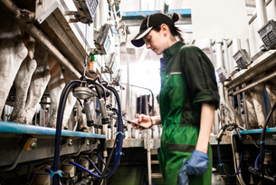 Dairy farm worker texting while working in milking parlourの写真素材 [FYI03607768]