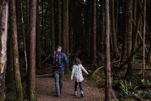 Father and daughter hiking in forest, Tofino, Canadaの写真素材 [FYI03608570]