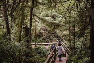 Father and daughter hiking in forest, Tofino, Canadaの写真素材 [FYI03608573]