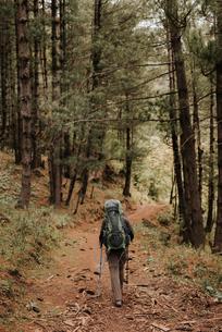 Hiker in forest, Annapurna Circuit, the Himalayas, Tatopani, Nepalの写真素材 [FYI03608637]