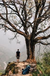 Hiker beside tree on peak, Annapurna Circuit, the Himalayas, Manang, Nepalの写真素材 [FYI03608647]