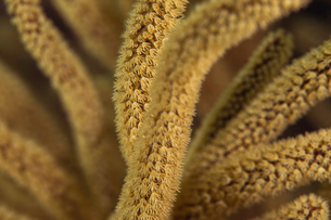 Macro image of coral, British Virgin Islandsの写真素材 [FYI03608663]