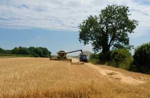 Combine harvester and tractor harvesting cropの写真素材 [FYI03610208]