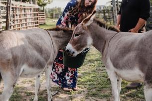 Couple feeding pet donkeysの写真素材 [FYI03610646]