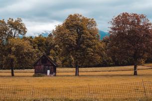 Autumn landscape with rustic agricultural building, Francenigo, Veneto, Italyの写真素材 [FYI03612085]
