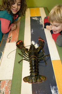 Boy and girl looking at lobster on tableの写真素材 [FYI03613692]