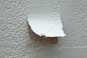 Torn wallpaperの写真素材 [FYI03613731]