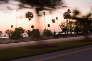 Palm trees at roadside, Miami, Florida, USAの写真素材 [FYI03613962]