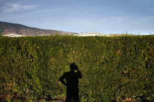 Shadow of man using cell phone on hedgeの写真素材 [FYI03614328]