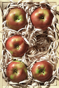 Apples in packagingの写真素材 [FYI03614637]