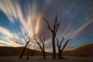 Stars and storm clouds over the dead acacia trees in Dead Vlei.Sossusvlei, Namibiaの写真素材 [FYI03615302]