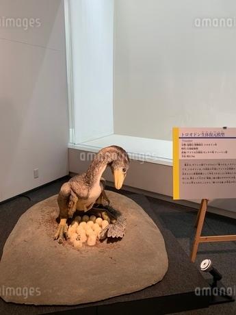 恐竜の写真素材 [FYI03615332]