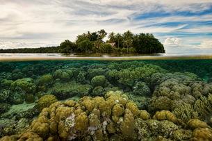 Coral below waterline, Uepi Island, New Britain, Solomon Islandsの写真素材 [FYI03615349]