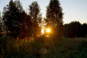 Landscape with backlit trees and long grass at sunsetの写真素材 [FYI03616421]