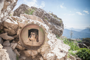 Dog looking out from circular dog kennel in rural rock, Nuoro, Sardinia, Italyの写真素材 [FYI03616435]