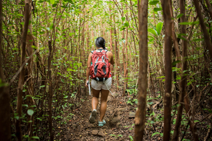 Hiker walking in rainforest, Iao Valley, Maui, Hawaiiの写真素材 [FYI03617346]