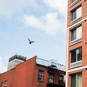 Bird in flight by buildings, Brooklyn, New York, USの写真素材 [FYI03617433]
