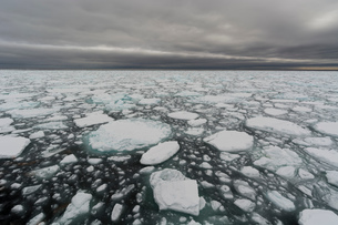 Floating pieces of pack ice, Polar Ice Cap, 81north of Spitsbergen, Norwayの写真素材 [FYI03617815]