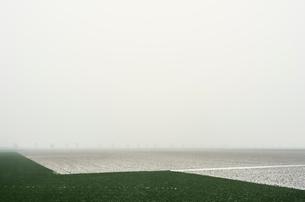 Overdiepse polder in agricultural area, Waspik, Noord-Brabant, Netherlandsの写真素材 [FYI03618426]