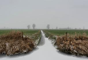 Overdiepse polder in agricultural area, Waspik, Noord-Brabant, Netherlandsの写真素材 [FYI03618433]