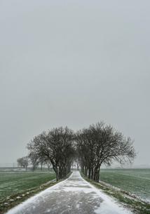 Overdiepse polder in agricultural area, Waspik, Noord-Brabant, Netherlandsの写真素材 [FYI03618434]