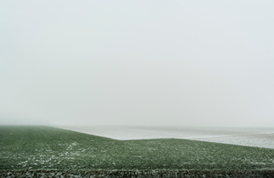 Overdiepse polder in agricultural area, Waspik, Noord-Brabant, Netherlandsの写真素材 [FYI03618437]