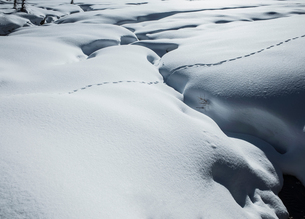 Animal tracks in snow covered landscape,  Alpe Ciamporino, Piemonte, Italyの写真素材 [FYI03618759]