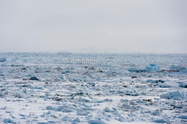Ice landscape and misty horizon, Wahlenberg fjord, Nordaustlandet, Svalbard, Norway.の写真素材 [FYI03618966]