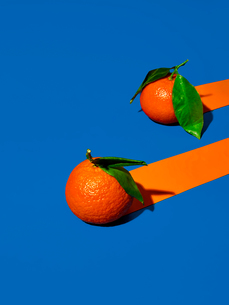 Two oranges on vivid blue background with trailing orange stripesの写真素材 [FYI03619085]