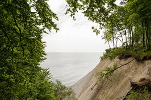 Landscape with trees on the edge of coastal chalk cliffs, Jasmund National Park, Sassnitz, Rugen, Meの写真素材 [FYI03621033]