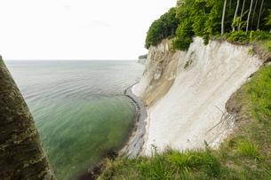 Landscape with trees on the edge of coastal chalk cliffs, Jasmund National Park, Sassnitz, Rugen, Meの写真素材 [FYI03621035]