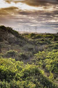 Lush foliage, wind turbines in background, Fortaleza, Ceara, Brazilの写真素材 [FYI03621680]