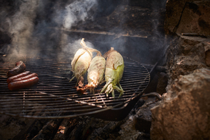 Sausages and corn cooking on campfireの写真素材 [FYI03622345]