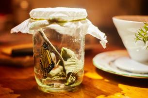 Monarch butterfly in jarの写真素材 [FYI03622351]