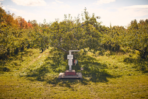 Scale in apple orchardの写真素材 [FYI03622377]