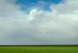 Field landscape with pasture and dyke, Valom, Groningen, Netherlandsの写真素材 [FYI03622680]