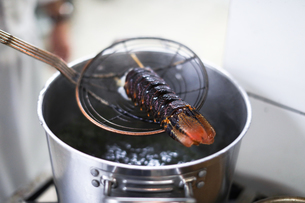Chef boiling lobster in kitchenの写真素材 [FYI03624479]