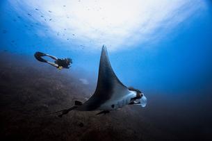 Giant Oceanic Pacific manta ray glides by male diver, Revillagigedo Islands, Socorro, Baja Californiの写真素材 [FYI03624625]